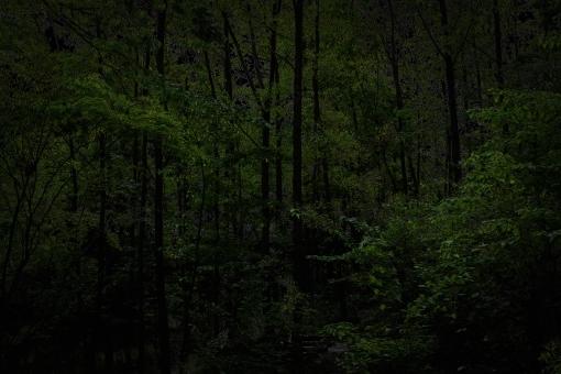 forest6358.jpg