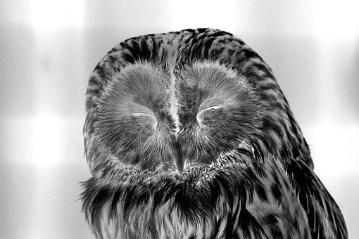 owl-2145698__340.jpg
