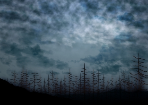rain_Forest4758563.jpg