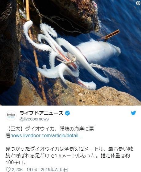 【深海】島根県の海岸に3メートル級の「ダイオウイカ」が漂着しているのを発見!