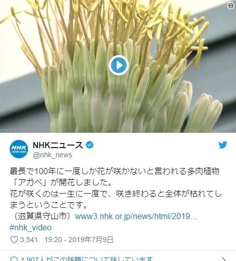 【凶兆】100年に一度しか咲かない希少な花「アガベ」が滋賀県で開花