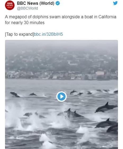 【地震前兆】カリフォルニアのビーチ沖で「イルカ100頭」がボートと並んで泳ぐ姿が目撃される!