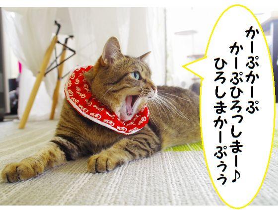 カープ猫②