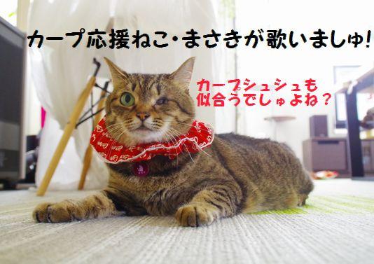 カープ猫①