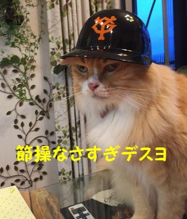 カープ猫⑩