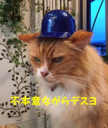 カープ猫⑨
