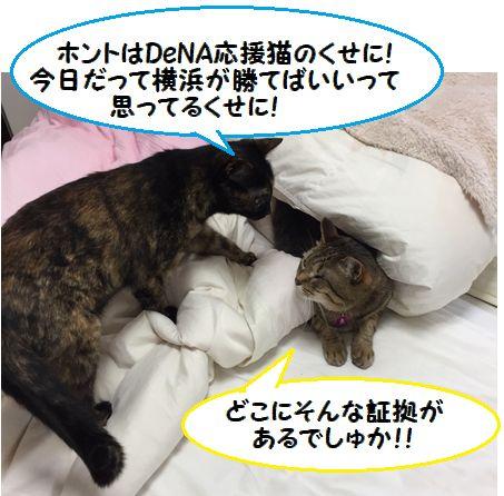 カープ猫⑦