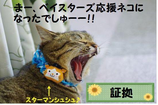 カープ猫⑧