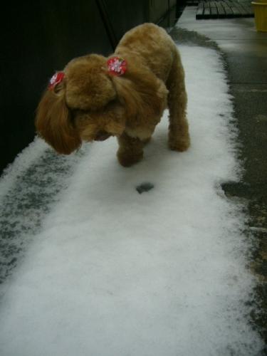 初めての雪 1歳4カ月