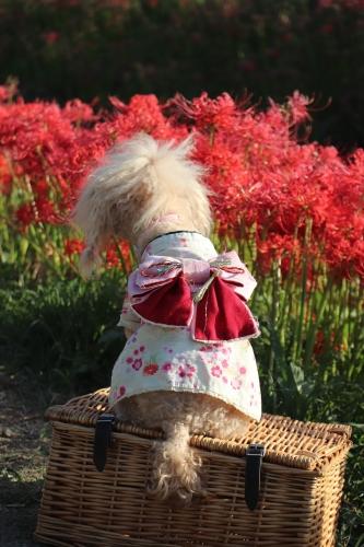 ごんの秋まつり