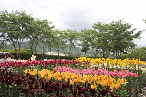 玉水ゆり園