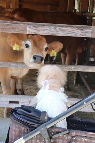 ミルク工房そら