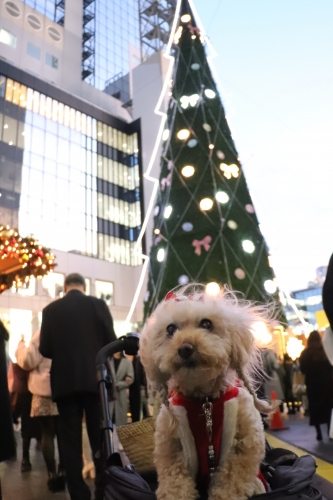 ドイツ・クリスマスマーケット大阪