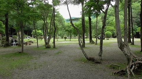 ナラ入沢-5
