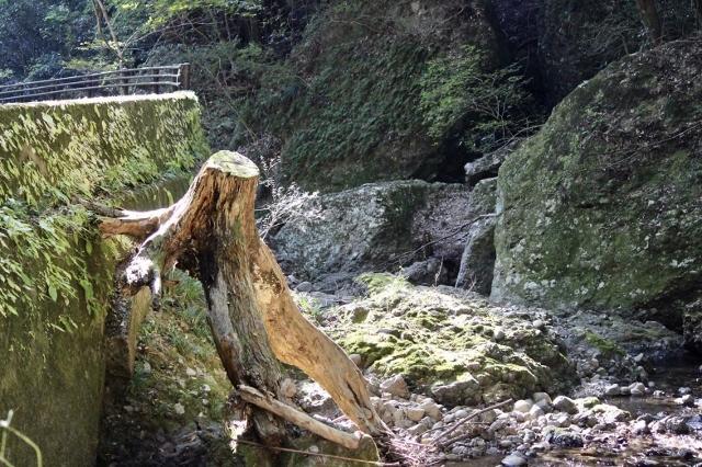阿寺の七滝11月 (147) (640x426)