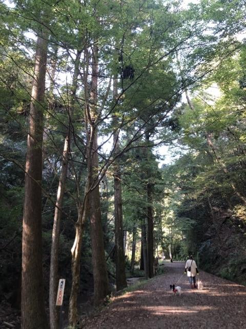 阿寺の七滝11月 (196) (480x640)