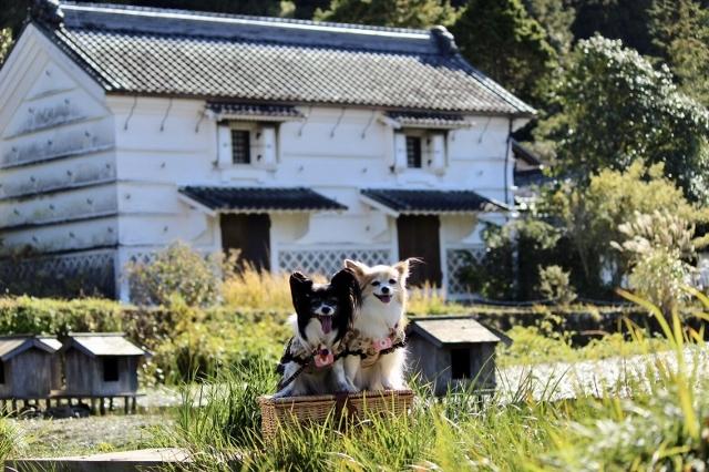 加茂荘花鳥園11月 (45) (640x426)