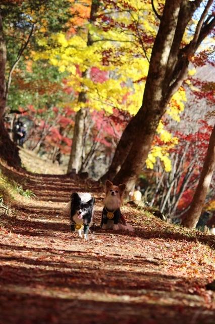 大井平公園 (132) (426x640)