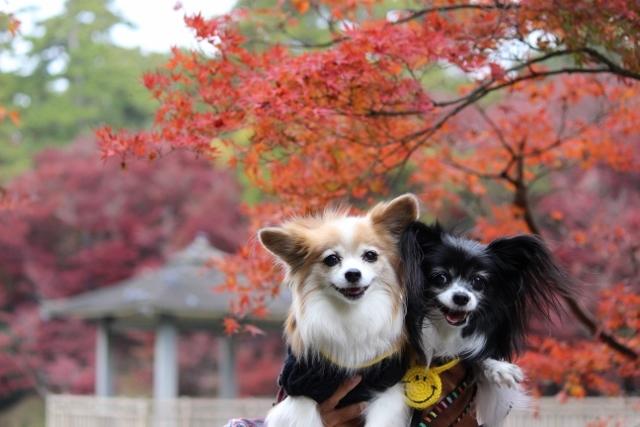 京都観光11月 (41) (640x427)
