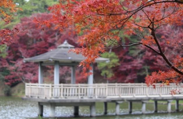 京都観光11月 (39) (640x427)