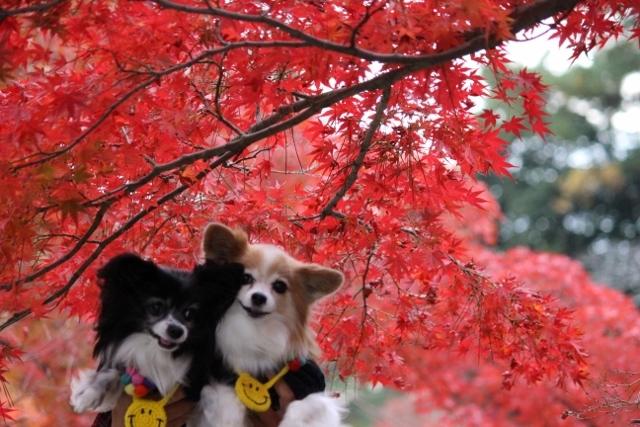 京都観光11月 (45) (640x427)