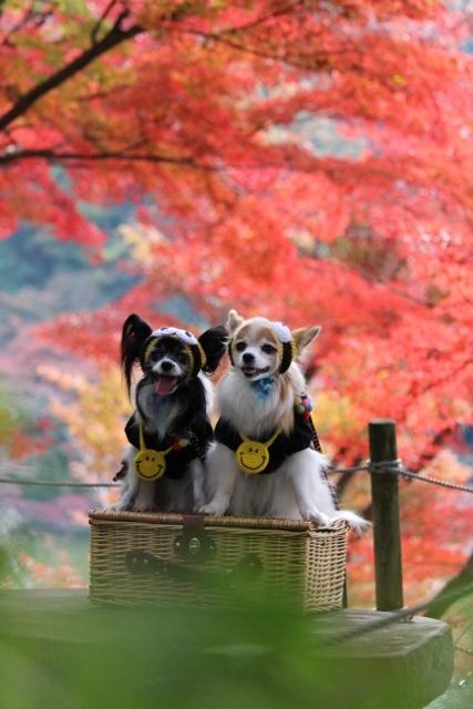 京都観光11月 (98) (427x640)