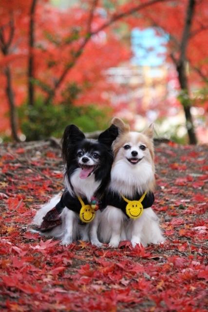 京都観光11月 (122) (427x640)