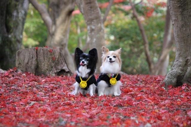 京都観光11月 (134) (640x427)