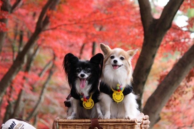 京都観光11月 (146) (640x427)