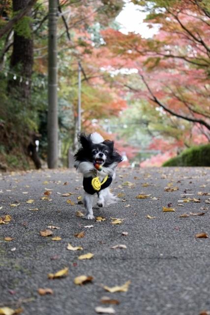 京都観光11月 (164) (427x640)