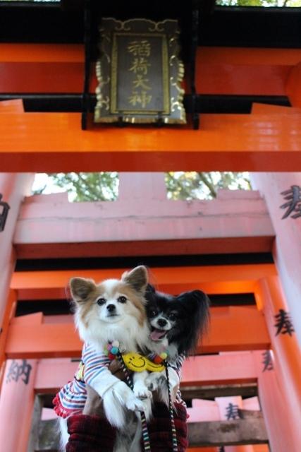 京都観光 (19) (427x640)