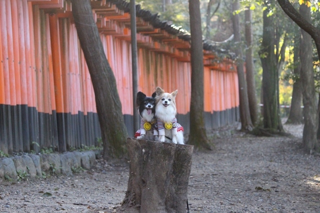 京都観光 (67) (640x426)