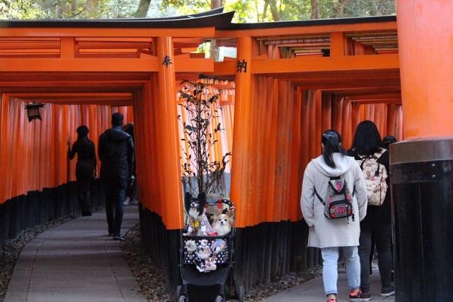 京都観光 (71) (640x426)