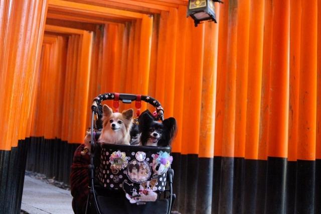 京都観光 (93) (640x426)
