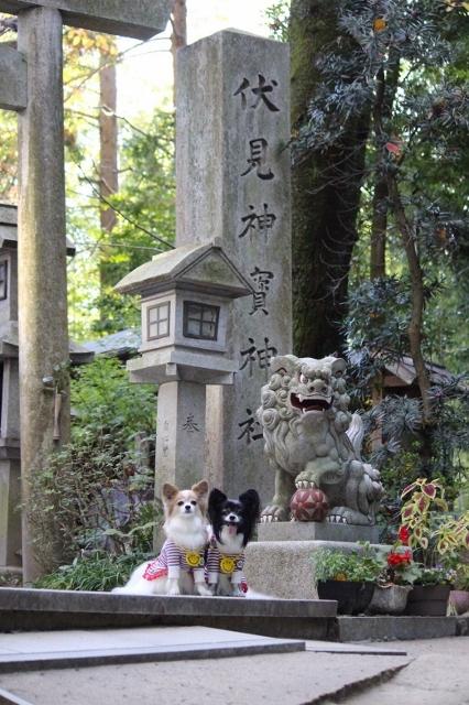 京都観光 (119) (426x640)