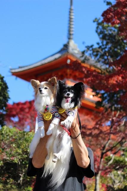 京都観光 (201) (426x640)