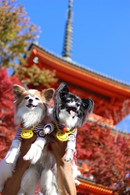 京都観光 (233) (426x640)