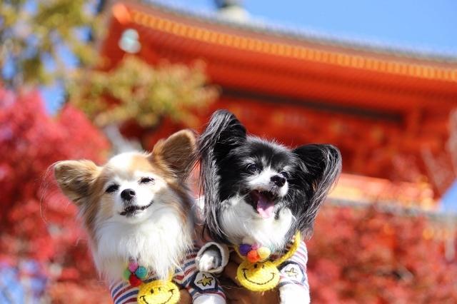 京都観光 (239) (640x426)