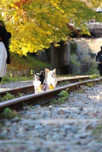 京都観光 (352) (427x640)