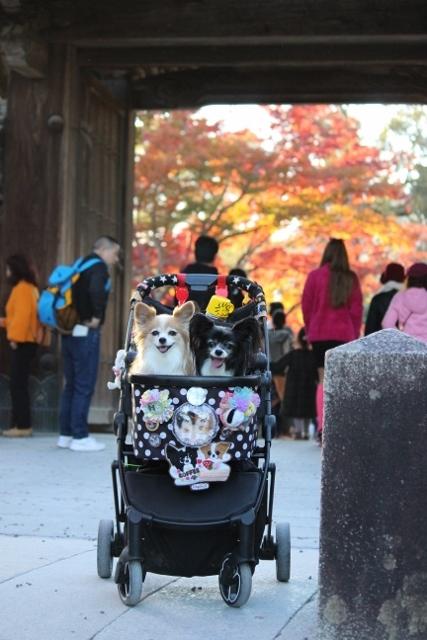 京都観光 (378) (427x640)