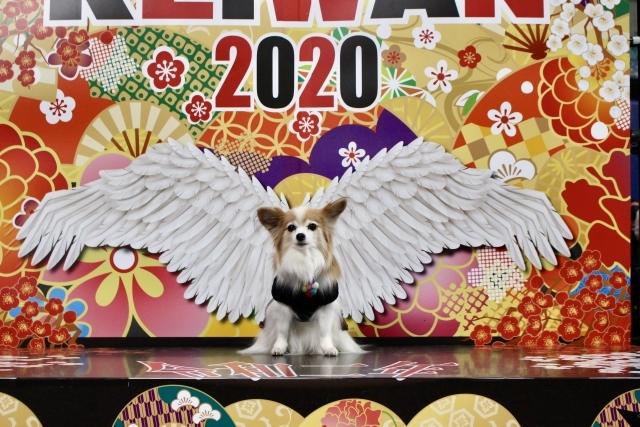 わんにゃんドーム2020 (70) (640x427)