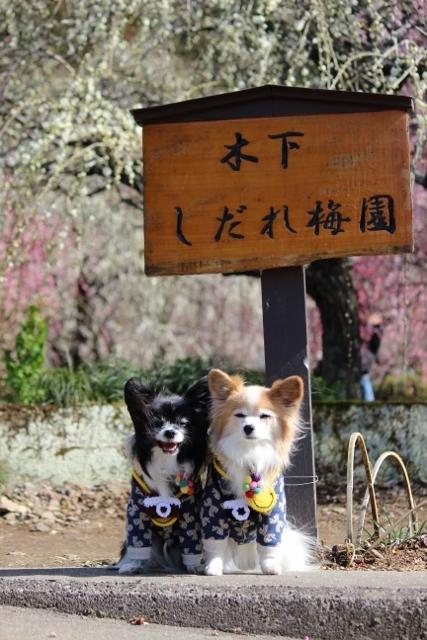 2020・2 木曽三川公園・かざはやの里 (53) (427x640)