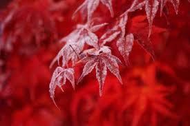 『花沢城物語~立冬ですってよっ!~』空色様より