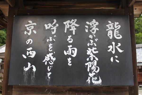2019.07.23 柳谷観音(紫陽花)-5