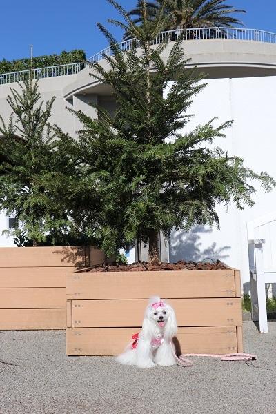 2019.12.09 秋の遠足in淡路島②明石海峡公園③-14