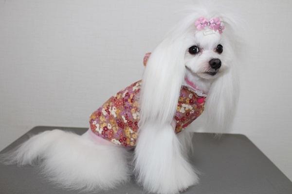 2020.03.02 犬服自習.13(キルティングジャケット①)-6
