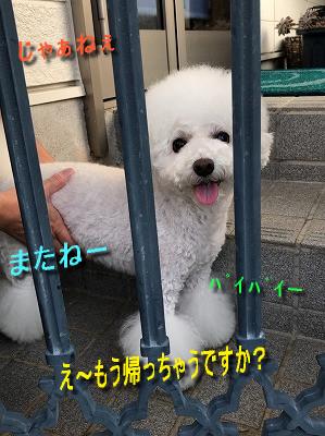 IMG_3731sc.jpg