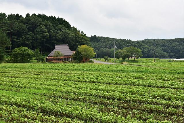 赤ソバ畑2