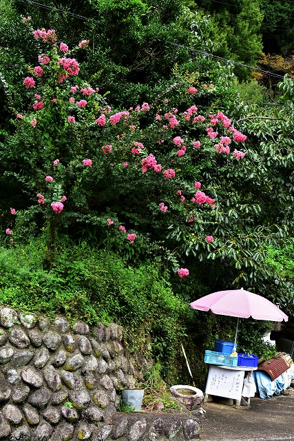 棚田の花4