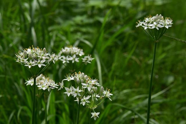 棚田の花10
